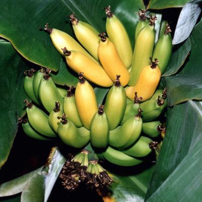 Jak (ne)zabalit banán